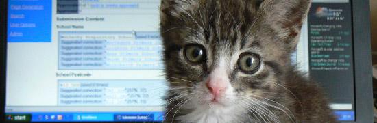 internetismadeofcats