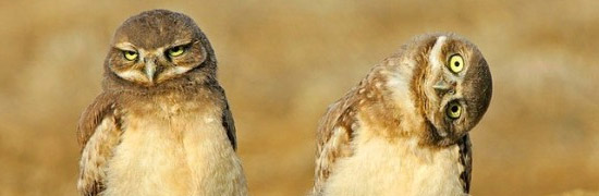 retard-owl